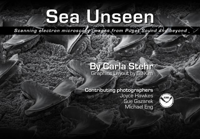 SeaUnseen_titlepage