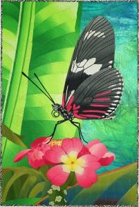 caryl-falllert-gentry-Lepidopteran4_26k